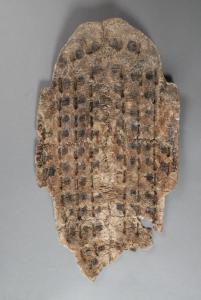 小犀:殷墟甲骨、马王堆帛书里藏着哪些中医文化?