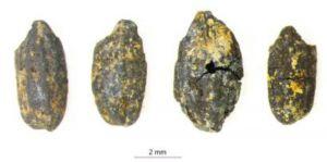 四川:金沙遗址祭祀区植物考古新进展——古蜀先民以何为食?