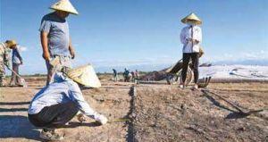 杨雪梅:北庭故城考古发现不断深入